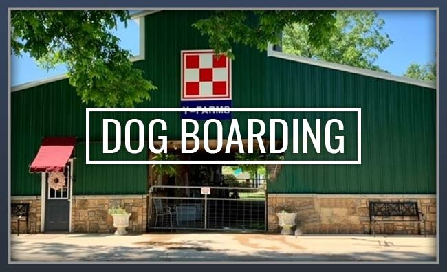Y-Farms Kennels Boarding Services