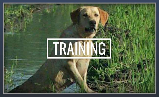 Y-Farms Kennels Training Services