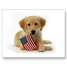 4th of July for your dog
