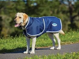 Does your 4 legged friend need a coat?