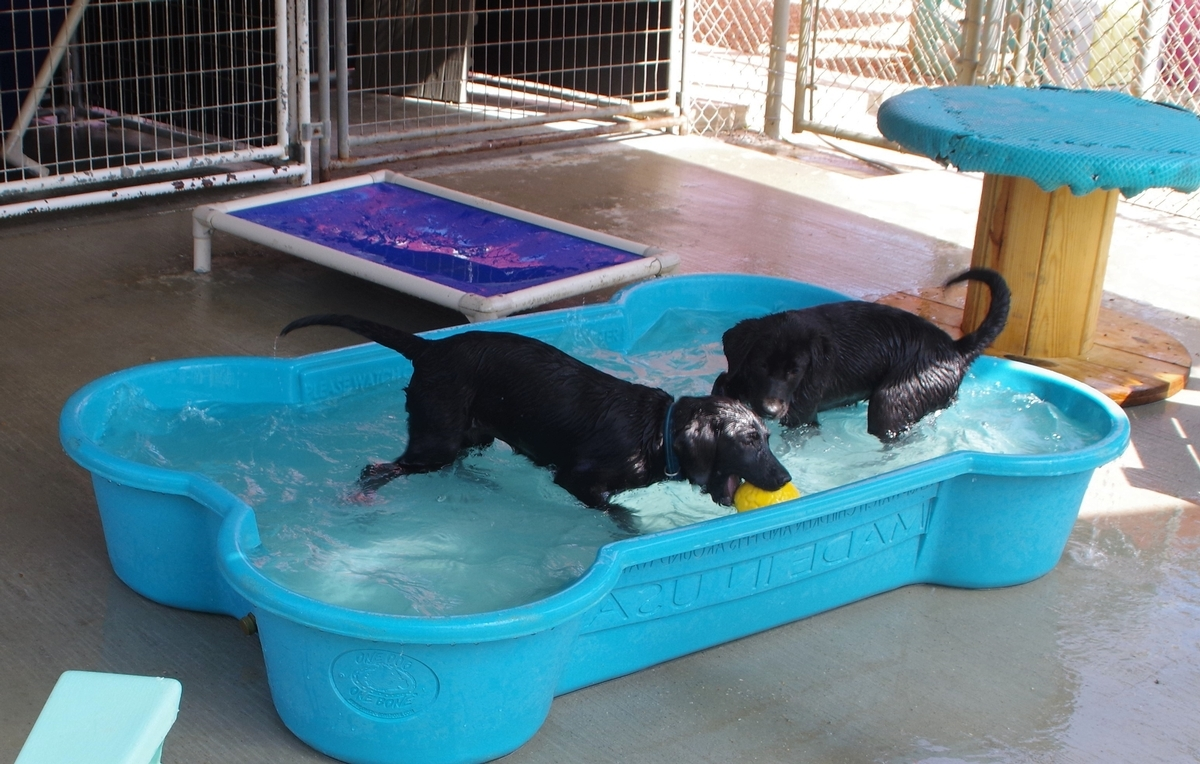puppy pool time