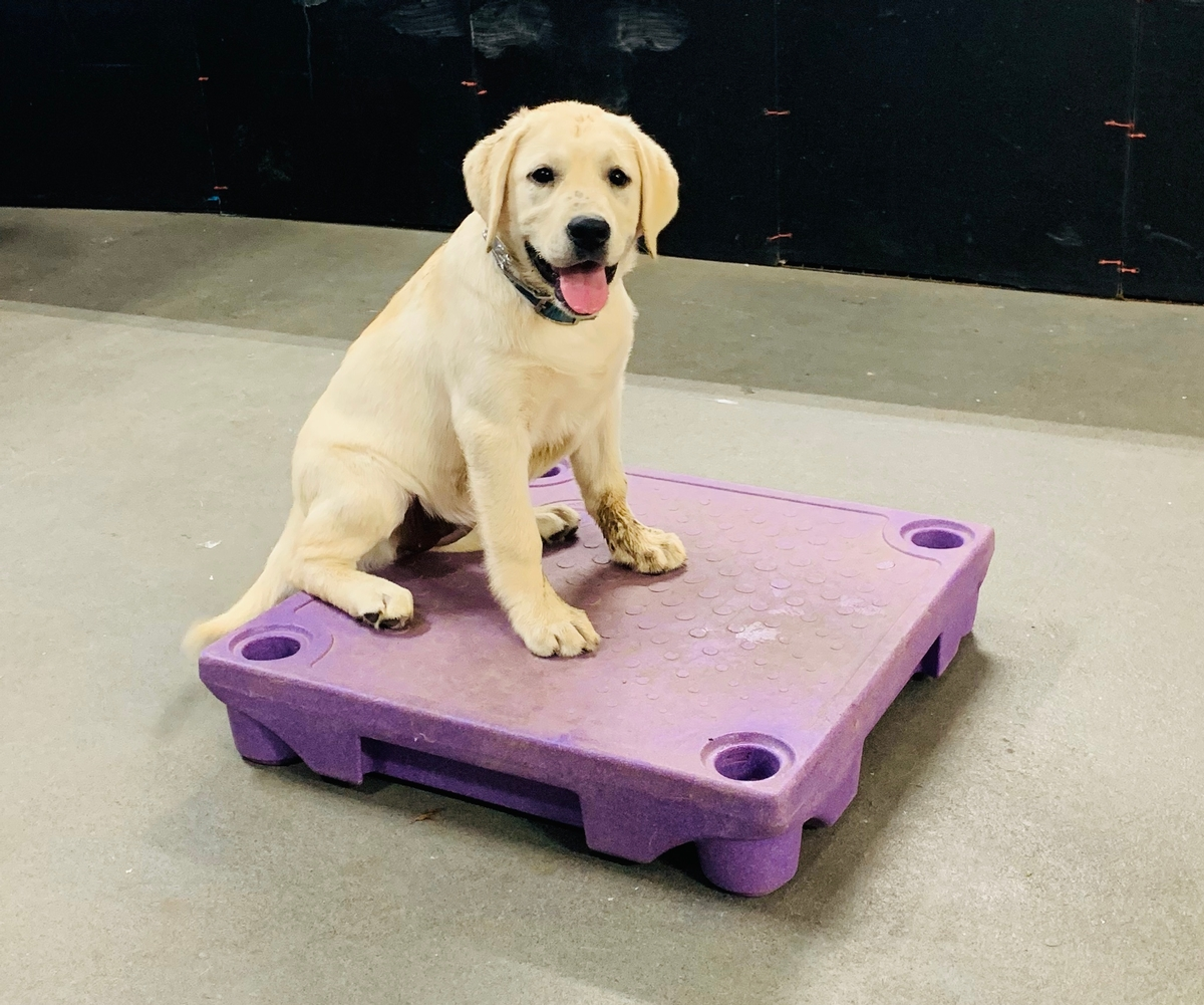 Puppy Basic Training