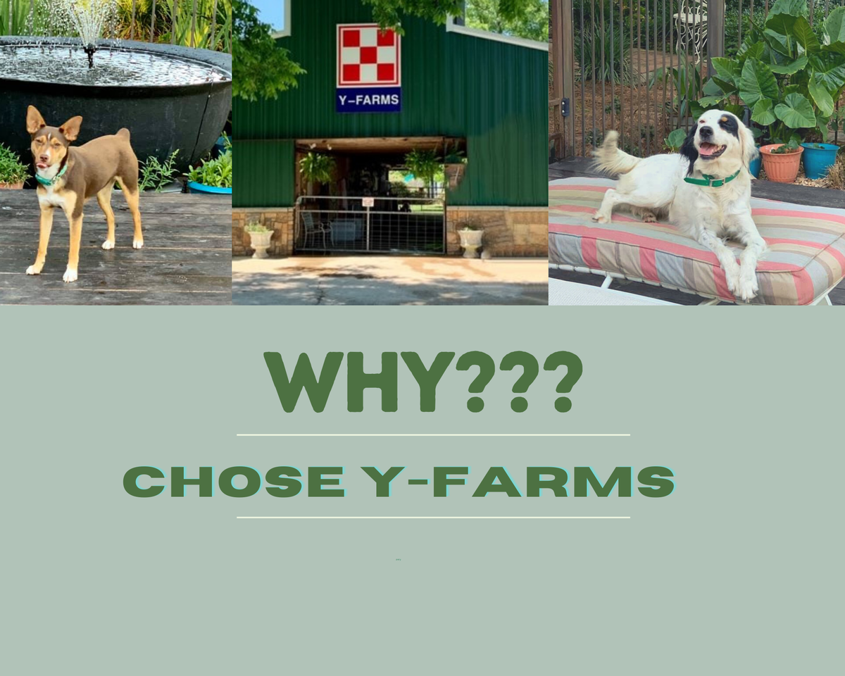 why chose yfarms